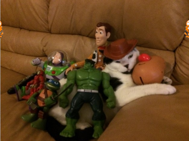 cattoystory